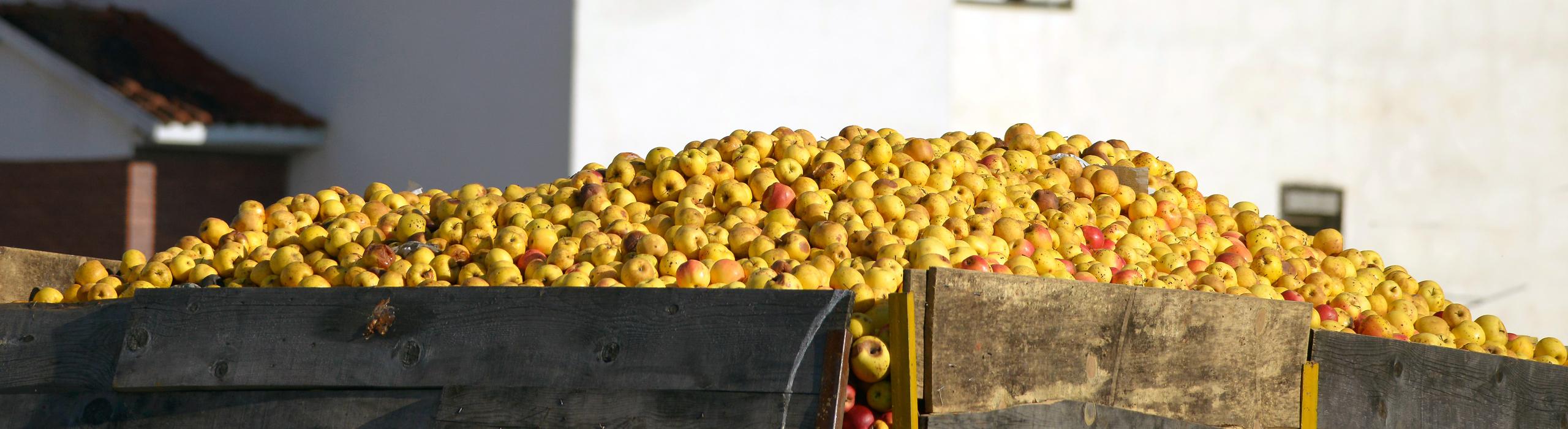 Bellmer Separation Technology Fruit Juice and Fruit