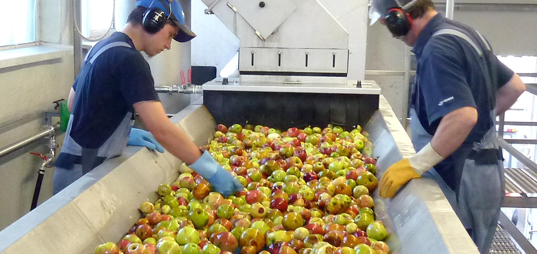 Bellmer Separation Technology Fruit Sorting Table